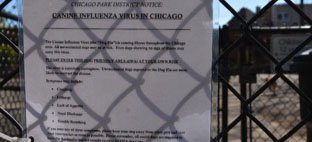Dog flu in Chicago terrifies dog parents, leads to empty parks