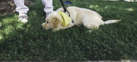 Pets and people celebrate adoption at Woofstock