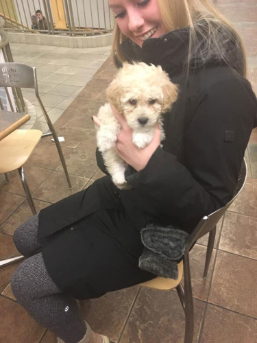 DePaul Dogspotters found this puppy in the Student Center. (Photo courtesy of EMILY DUNN)