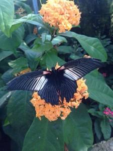 (Photo courtesy of The Peggy Notebaert Nature Museum)