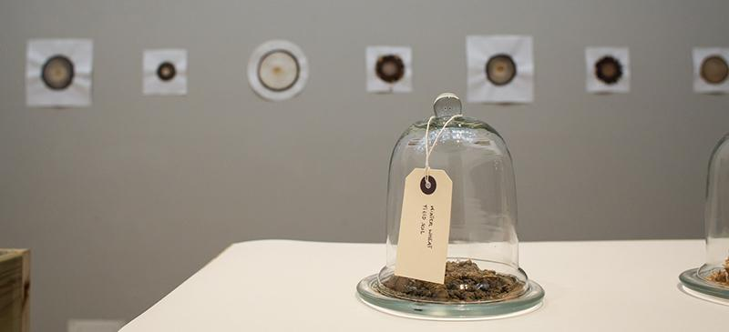 "Chicago-based artist Claire Pentecost's installation ""Our Bodies, Our Soils,"" will be on display as part of the ""Rooted in Soil"" exhibition at the DePaul Art Museum through April 26. (Photo courtesy of Claire Pentecost)"
