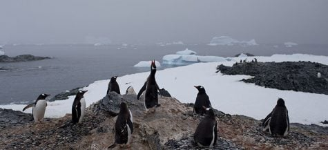 Gentoo penguins stand on a rock near station Bernardo O'Higgins, Antarctica. The melting of Antarctic glaciers as a consequence of global warming is concerning scientists because of rising sea levels that will eventually reshape the planet. (AP Photo/Natacha Pisarenko)