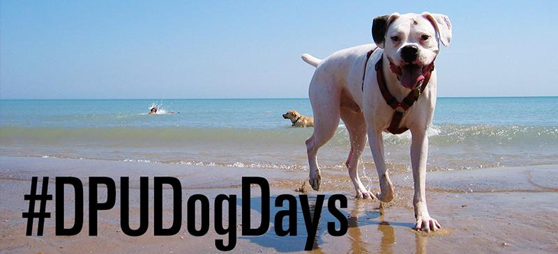 #DPUDogDays: How DePaul students are spending their summer