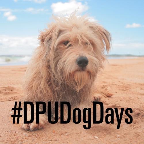 dog days instagram