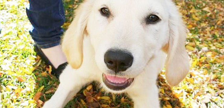 A bark to action: DePaul dog group promotes advocacy