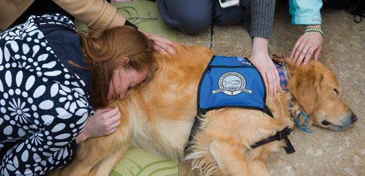 Photos: Therapy dogs bring cuddly comfort to campus