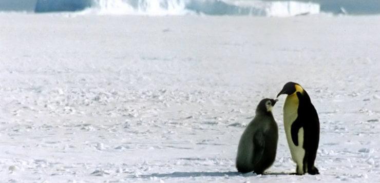 Sanctuary in the antarctic