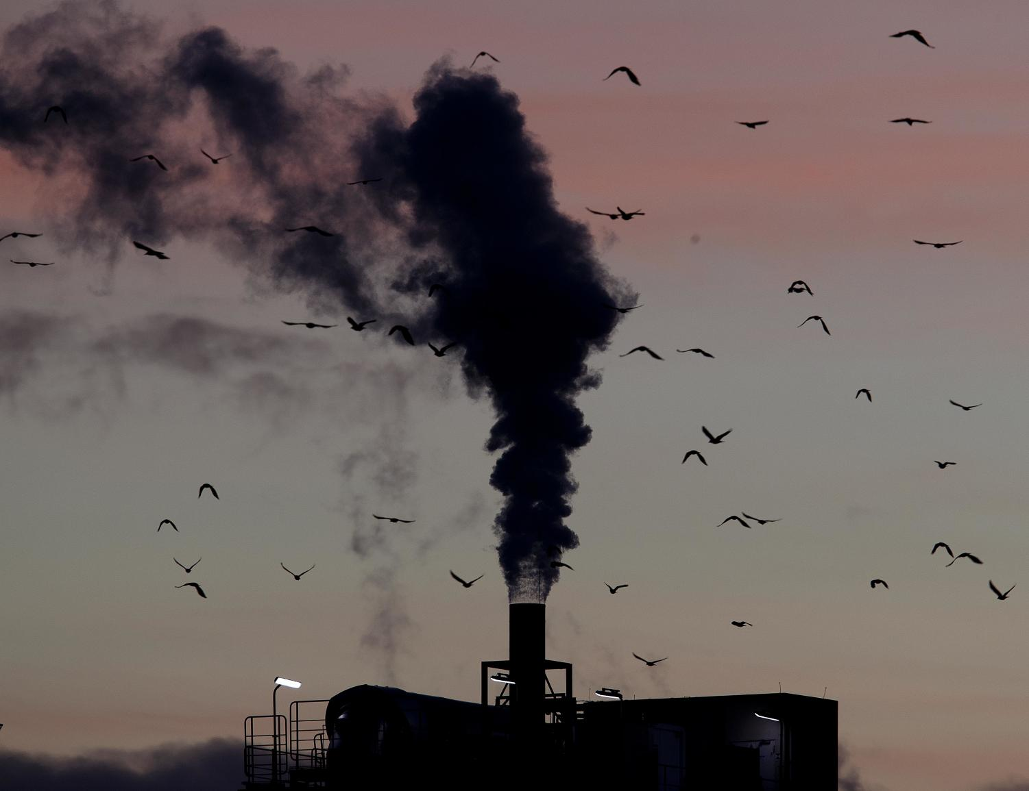 In this Dec. 4, 2018, file photo, birds fly past a smoking chimney in Ludwigshafen, Germany. Development that s led to loss of habitat, climate change, overfishing, pollution and invasive species is causing a biodiversity crisis, scientists say in a new United Nations science report released May 6, 2019.