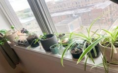 Plants bring health, life to interior design