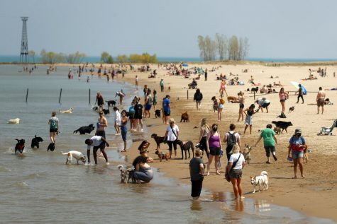 People gather with their dogs in Chicago